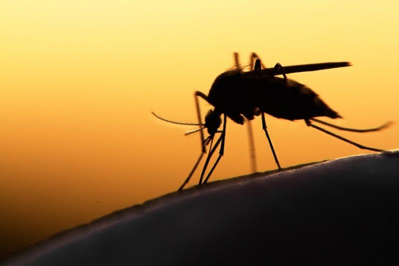 Malaria (paludisme) : Clinique de Santé Voyage à Québec